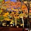 【2017/10/21~11/12】はこだてもみじフェスタ