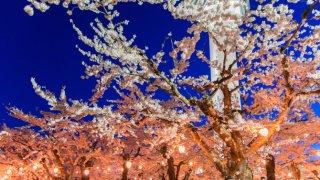 【2018年版】函館と周辺の定番&穴場お花見スポットまとめ