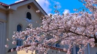 【2021/4/24~5/9】函館公園に露店(花見屋台)出店