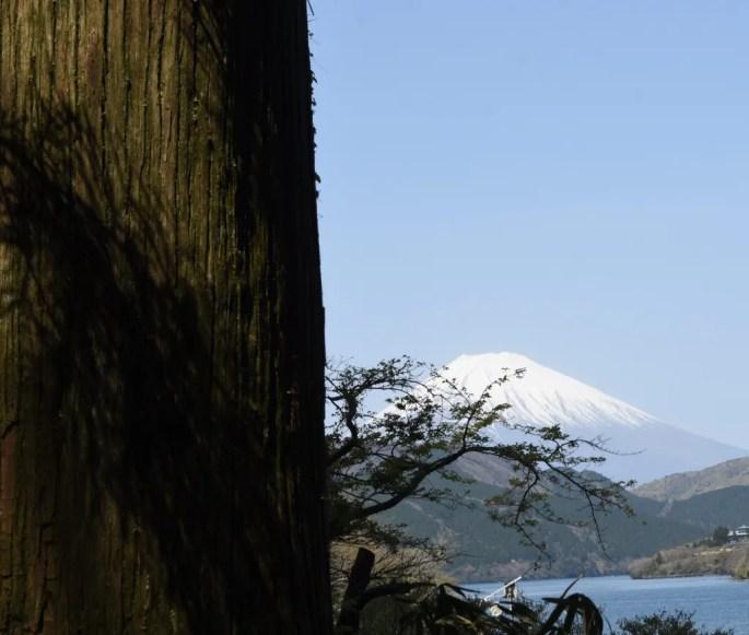 Fuji & Lake Ashinoko from Cedar Avenue