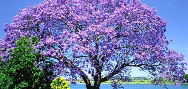 ما هي أجمل أنواع الأشجار