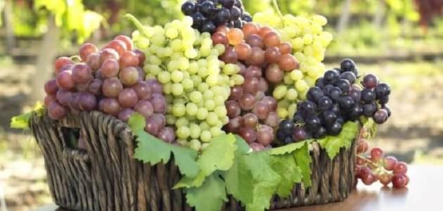 ما هي أنواع العنب