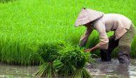 الأسمدة الزراعية دليلك الشامل