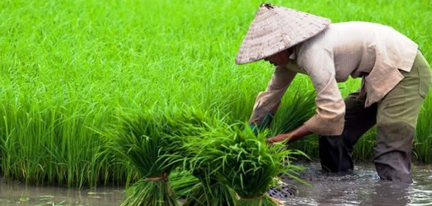 الأسمدة الزراعية دليلك الشامل لكل ماتريد معرفته عن الأسمدة الزراعية