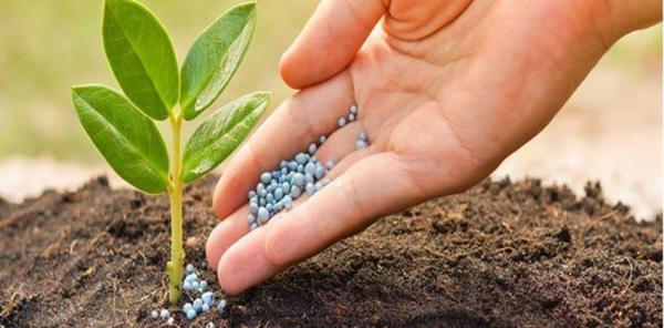 أهمية الأسمدة الزراعية