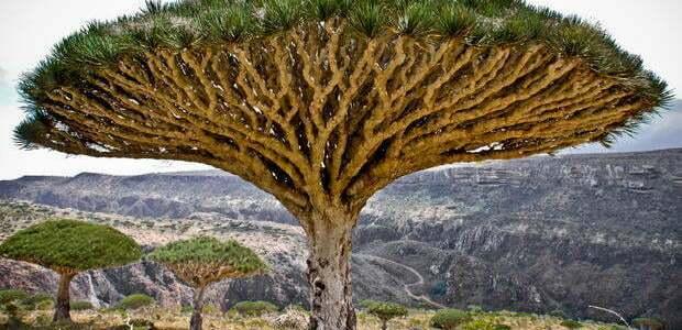 أفضل أنواع الأشجار وما هي أمراض الأشجار وكيفية علاجها