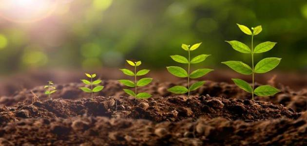 مراحل تشكل التربة..تفاصيل دقيقة وأحداث عملية تشكل التربة