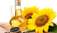 دوار الشمس كيفية زراعة دوار الشمس أو عبّاد الشمس وما هي فوائدها