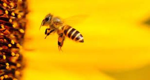 عمر العسل يعود إلى ملايين السنين