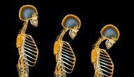 مرض هشاشة العظام .. دليلك الشامل عن أسباب ومخاطر هذا المرض العظمي