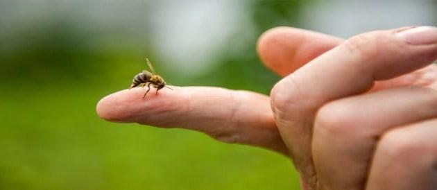 لسعة النحل و فوائدها و ما هي الأثار الجانبية للسعة النحل