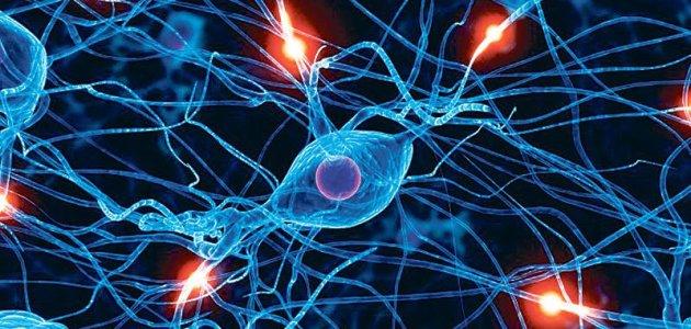 مكونات الخلية العصبية..ثلاث مكونات رئيسية تعرف عليها