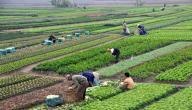 الدول المنتجة للخضروات
