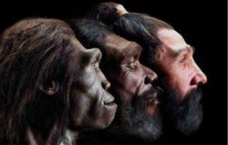 انسان دمانيسي من مليون و 800 الف سنة