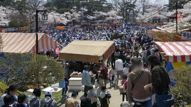 千秋公園 桜まつり 混雑