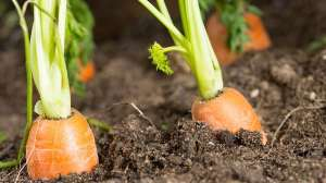 The general manager of the Department of Organic Agriculture in Saudi Arabia said organic farming is booming in Saudi Arabia. (File photo: Shutterstock)