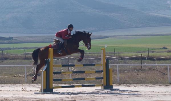Concurso de Saltos en el Centro Ecuestre de Salamanca
