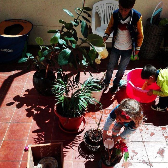 Puesta a punto de nuestras plantas