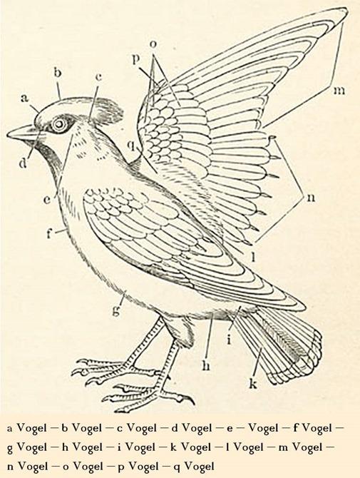 Halbtagsblog vogel