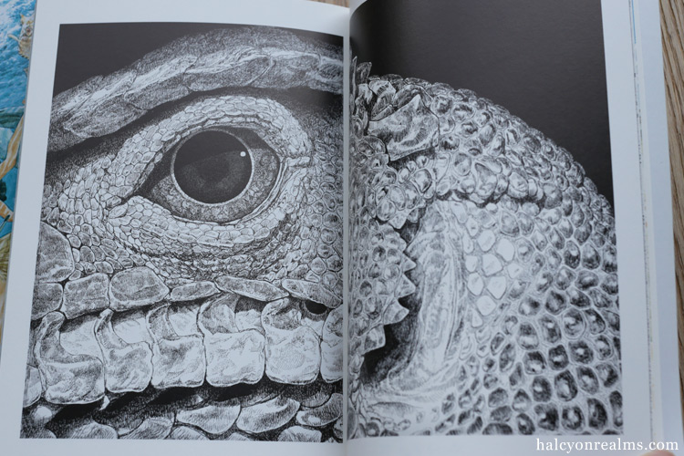 Daisuke Igarashi Art Book Review
