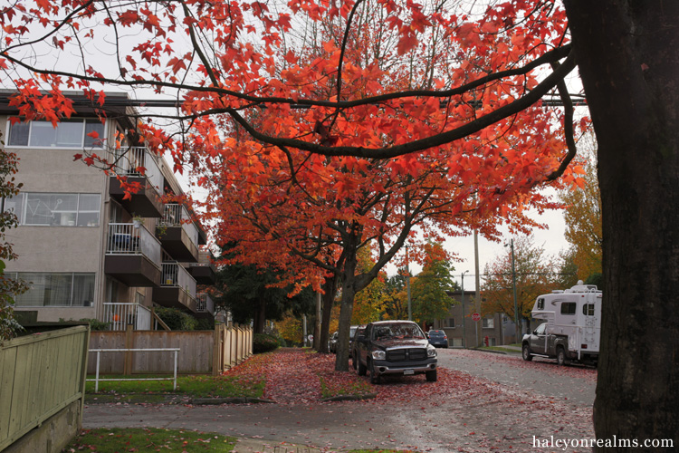 Autumn Colors, Vancouver B.C, 2016