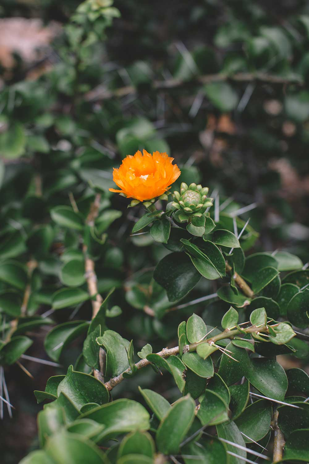 Small orange flower blooms in a sea of green leaves