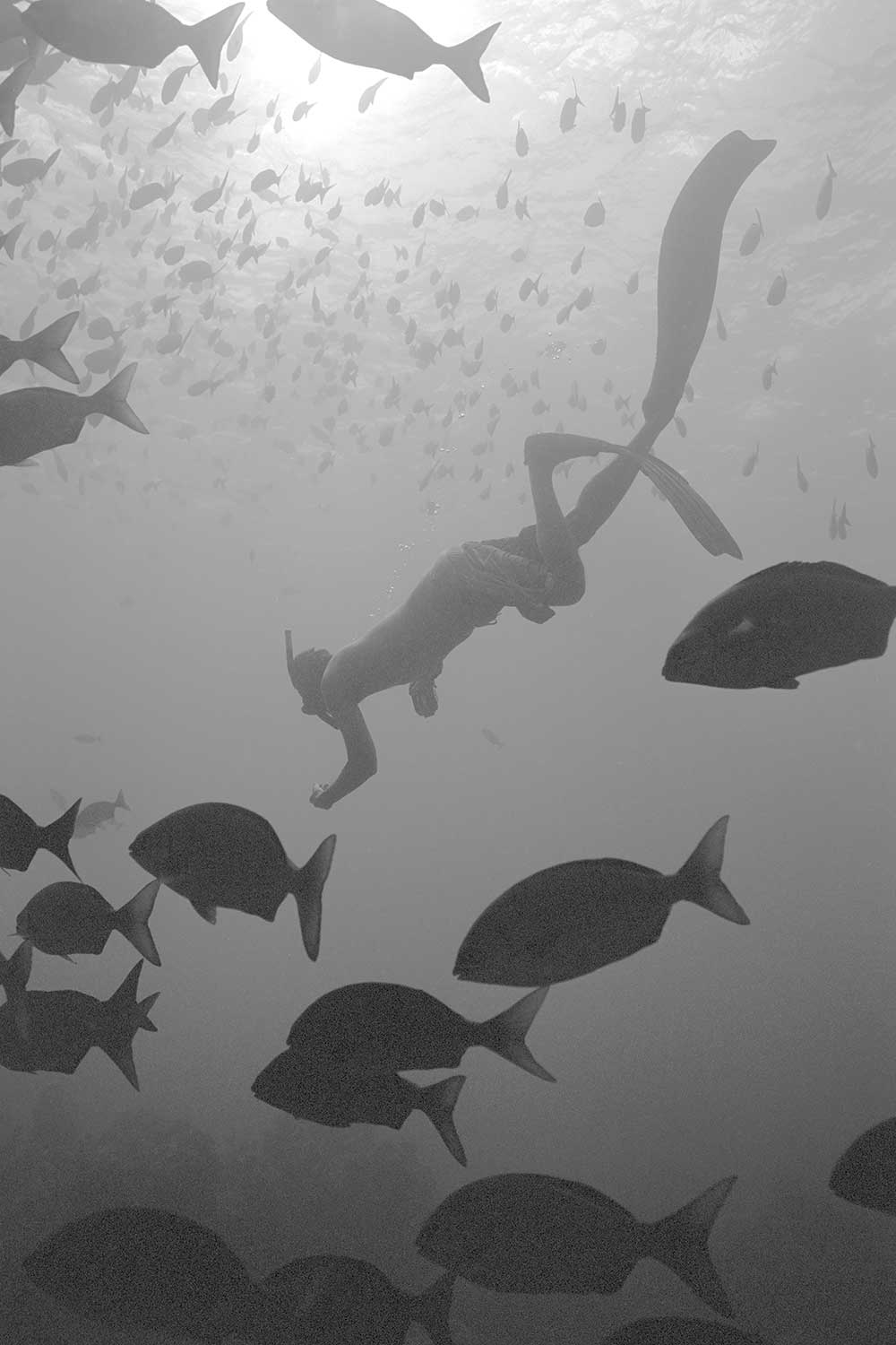 black and white photo of Randy Kosaki snorkeling in ocean with fish
