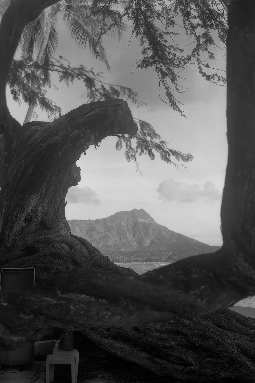 Black and white image of bark on kiawe tree framing Diamond Head