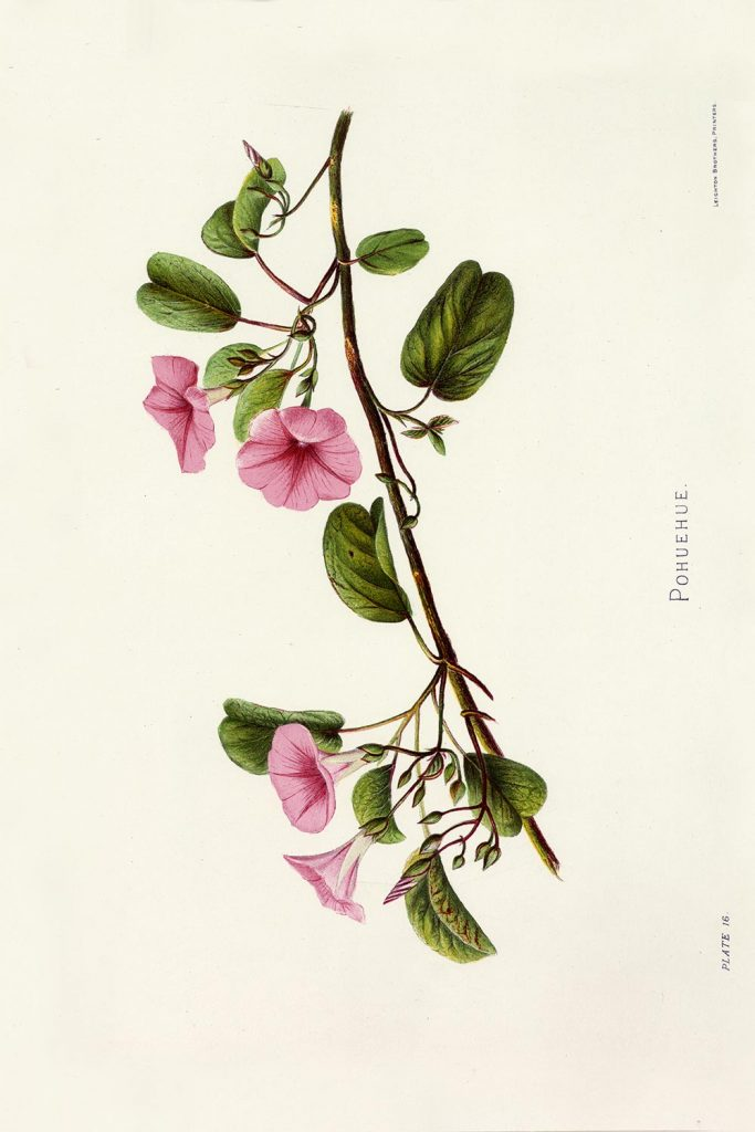 A print image of a branch with deep green leaves and four pink flowers.