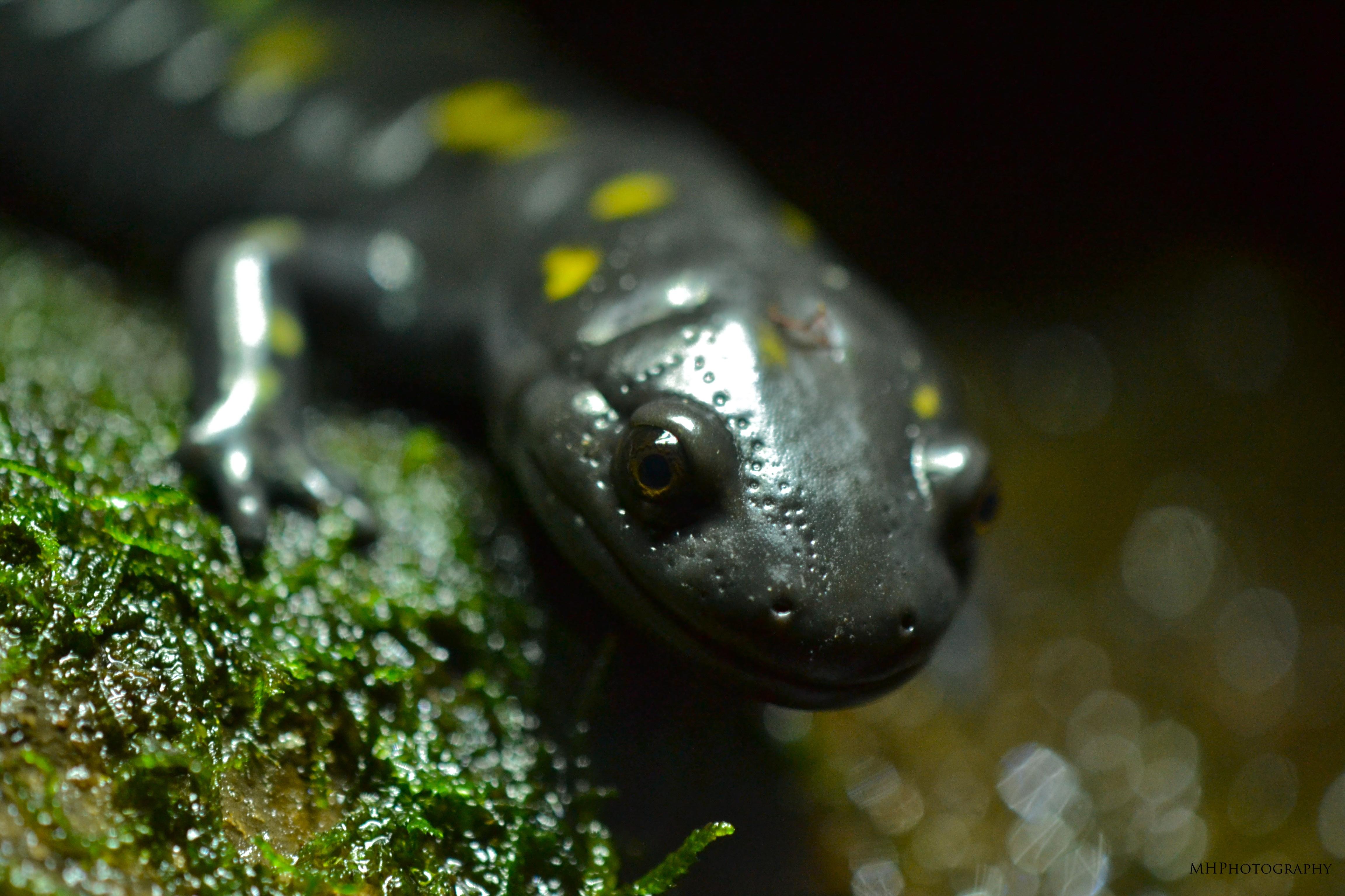 An Exciting Aquarium Trip Amphibians Reptiles And Fish