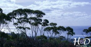 trees-by-the-sea