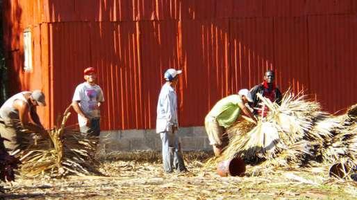 Fields n Farm (11)