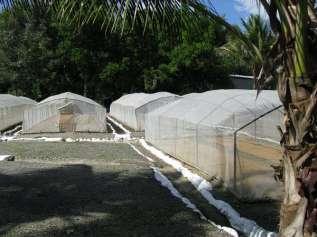 Fields n Farm (16)