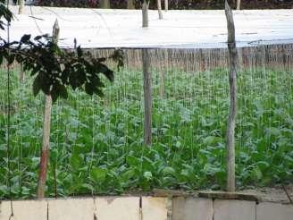 Fields n Farm (19)