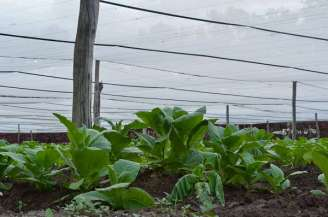 Fields n Farm (41)