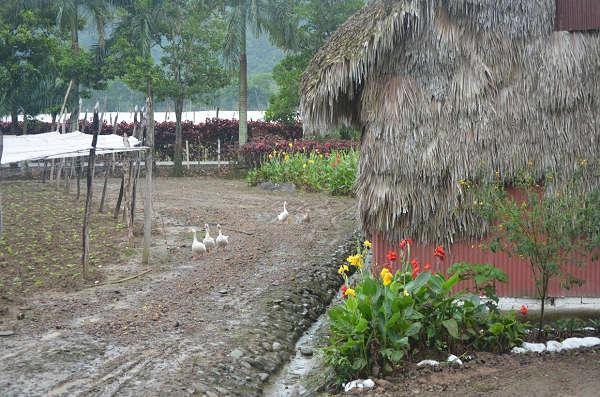 Fields n Farm (5)