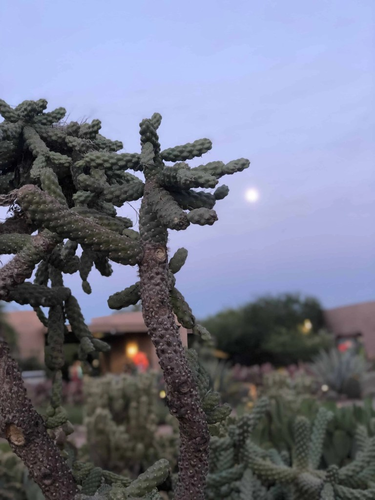 Cactus with moon