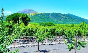 Campanie Italië rode wijn Vesuvius druiven vakantie