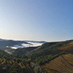 Douro wijnbouw terrassen rode wijn port Teoria wijngaard