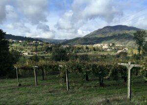 minho vinho verde wijn mafesousa kleine fles Portugese wijn
