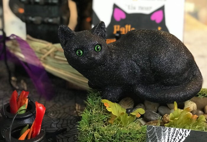 Black Cat Halloween Party Reveal