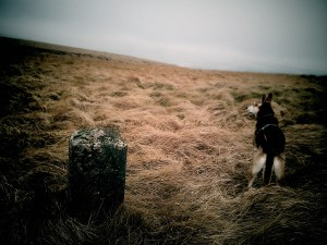 brodie dog and stone marker