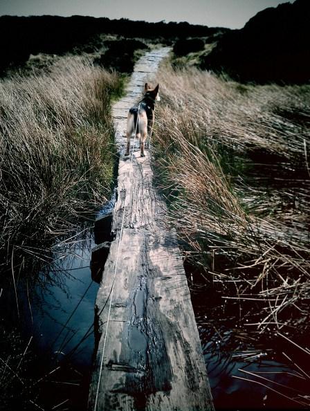 Plank crossing a stream near Black Hill