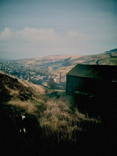 Brodie Dog looking down the Marsden