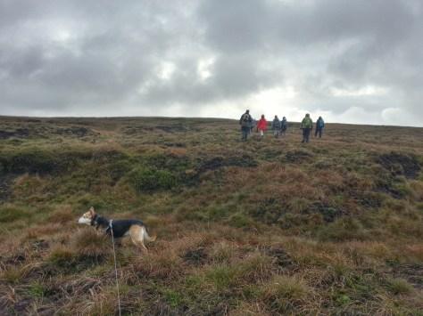 Marsden Moor National Trust - Hare walk