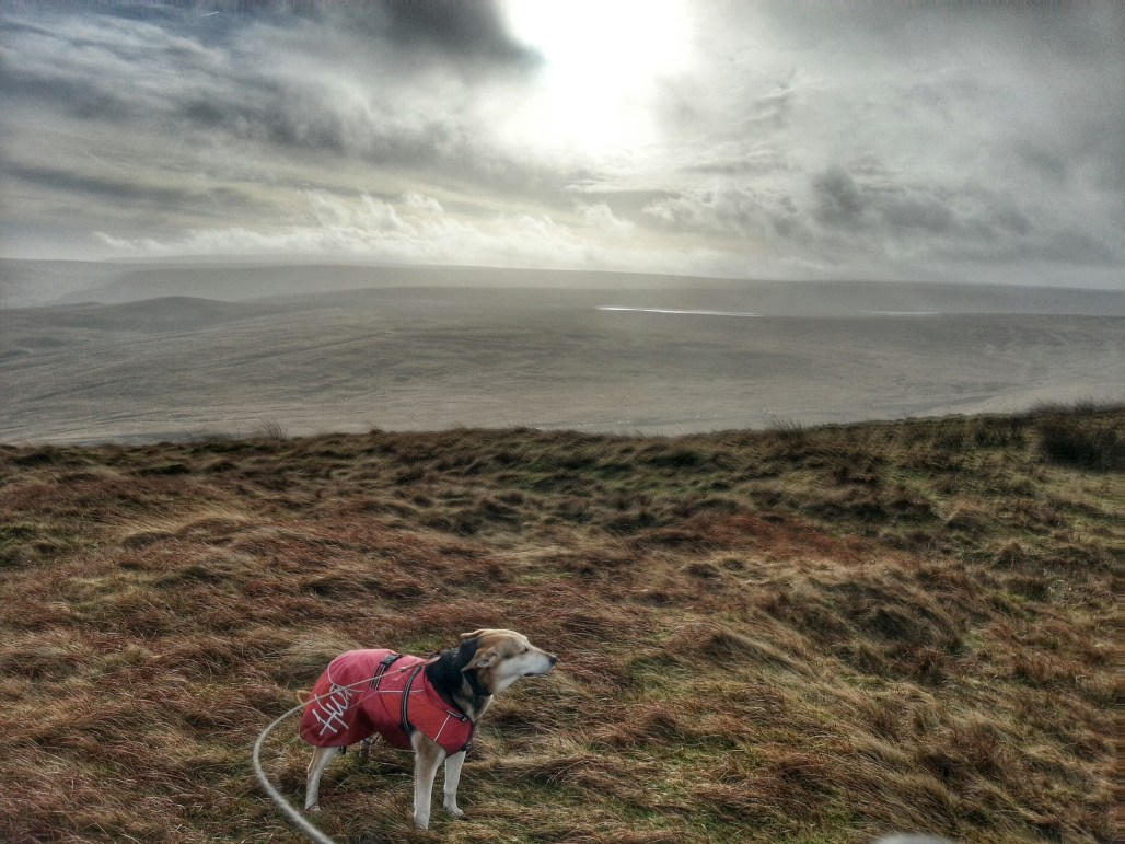 Brodie Dog on Pule Hill on Poetry Trail Marsden