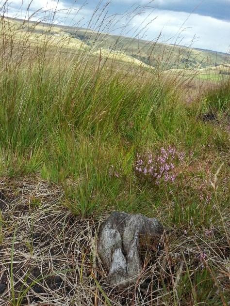 Millstone Edge Close Moss Marsden Moor hike