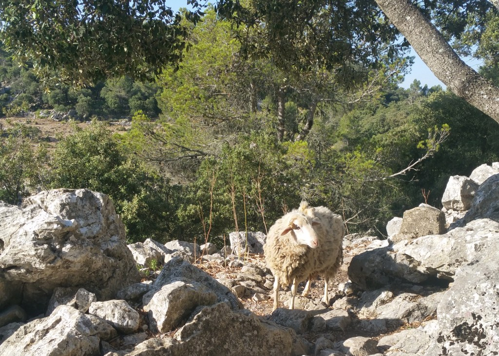 GR221 Mallorca hiking Tossals verds to Soller