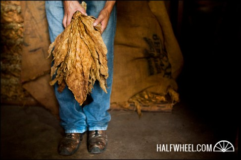 A hand of tobacco at My Father Cigars S.A.