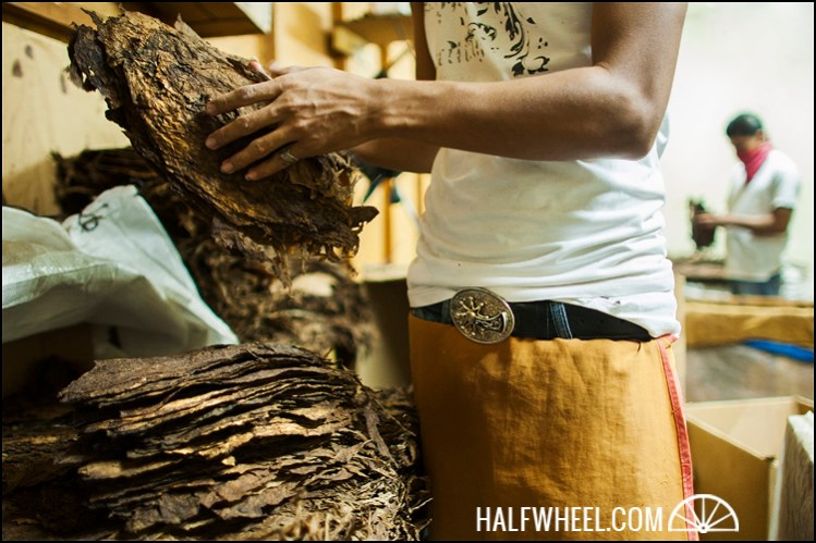 Workers sorting dry tobacco leaves. I loved the belt buckle.